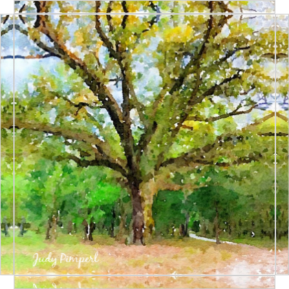 """The Grand Live Oak Tree at Pimperl Place on 8"""" x 8"""" Canvas"""