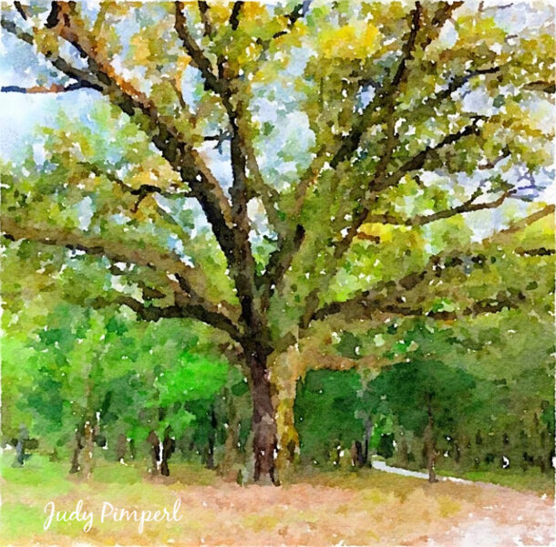 "The Grand Live Oak Tree at Pimperl Place on 8"" x 8"" Canvas"